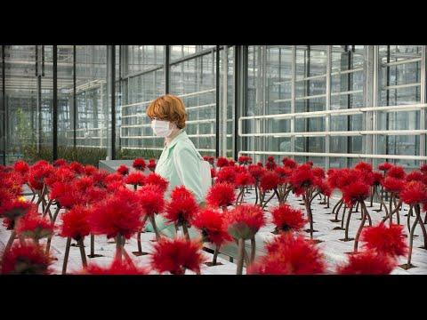 LITTLE JOE | Officiële Nederlandse Trailer
