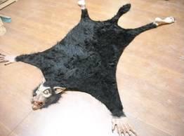 Weerwolfkleedje voor bij de openhaard