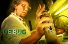 de bug - carry tefsen